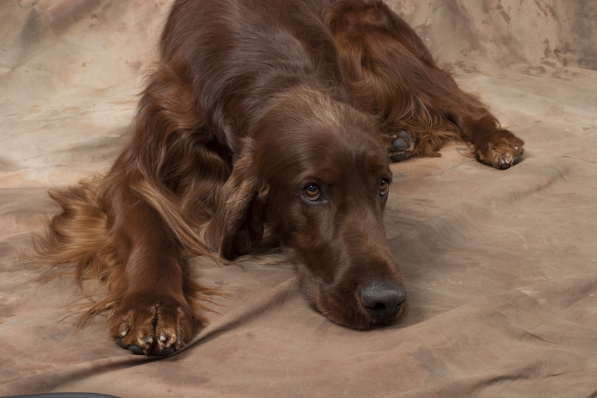 Tag Archives: Pregnant Dog Nutrition
